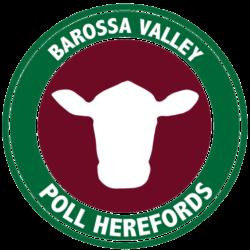 Barossa Valley Poll Herefords